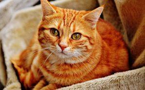 Schorzenia dróg moczowych u kotów